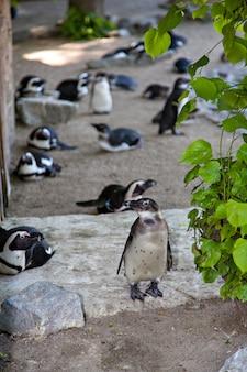Grupo de pinguins no zoológico