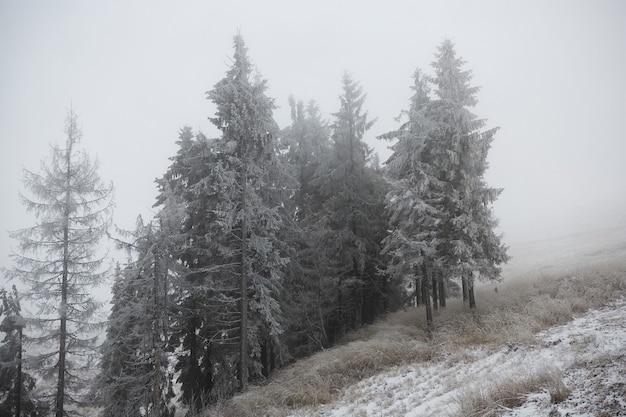 Grupo de pinheiros e abetos no meio do nevoeiro na encosta de uma montanha na neve