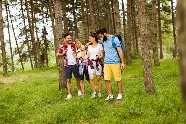 Grupo de quatro amigos caminhando juntos através de uma floresta