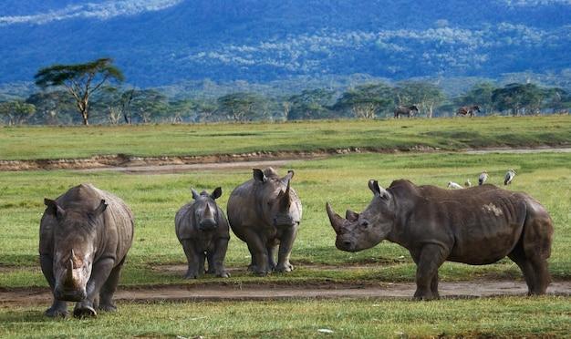Grupo de rinocerontes no parque nacional.