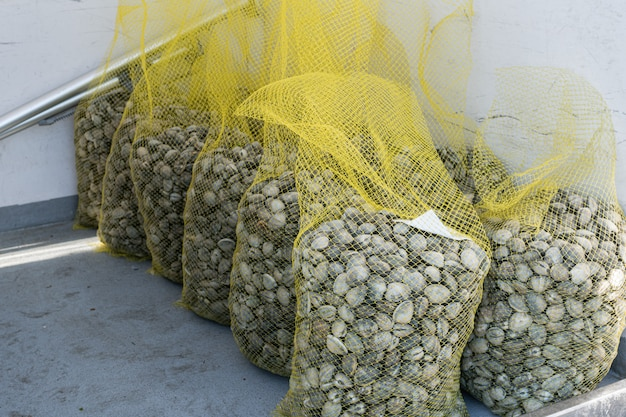 Grupo de saco de rede de amêijoas frescas