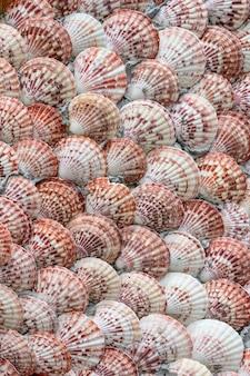 Grupo de textura de marisco e molusco
