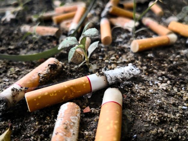 Grupo de toco de cigarro no chão com uma pequena árvore.