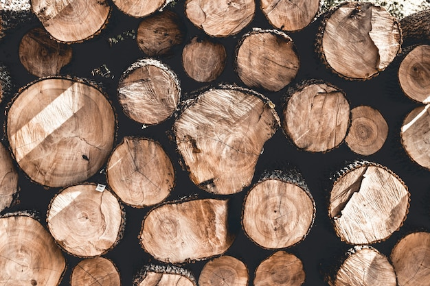 Grupo de tocos de árvore