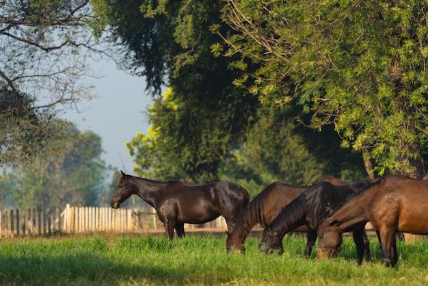 Grupo, de, três, jovem, cavalos, ligado, a, pasto