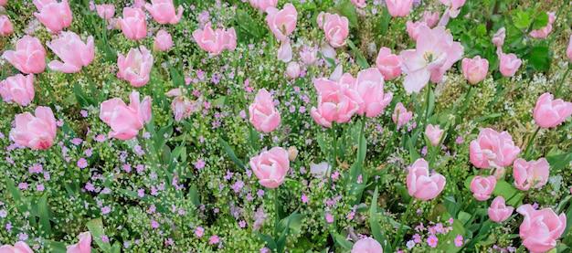 Grupo de tulipas cor-de-rosa na estrada lateral em nova zelândia.