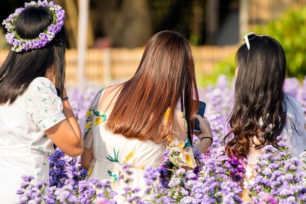Grupo de turistas tirando fotos desfrutando com flores florescendo de margaret em chiangmai, tailândia