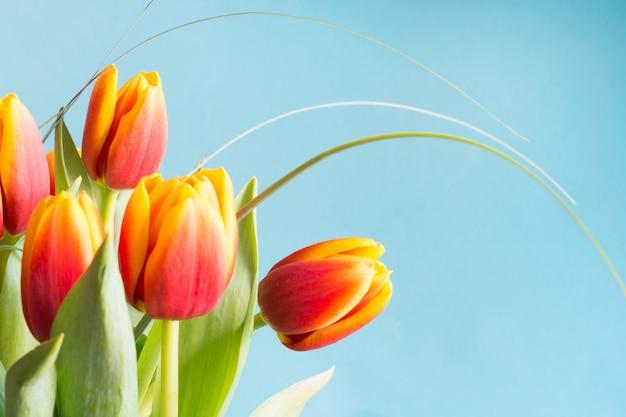 Grupo do conceito vermelho e amarelo das flores da tulipa.