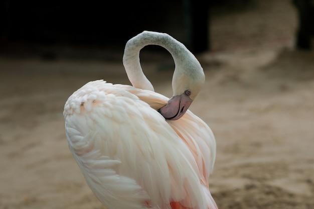 Grupo dos flamingos que está na água. parque nacional da tailândia.