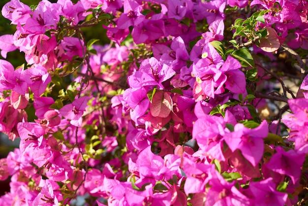 Grupo mola da flor de objetos fundos natureza