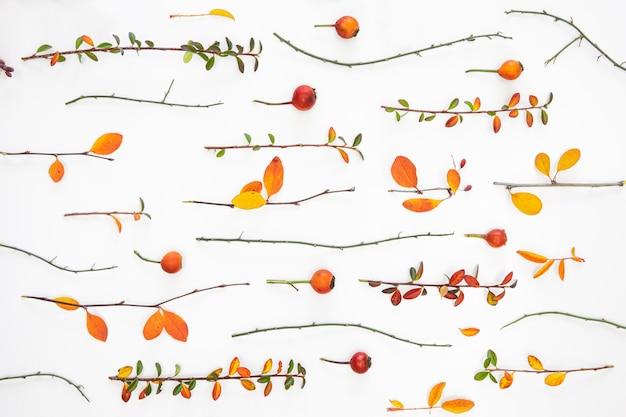 Grupo plano de folhas e flores