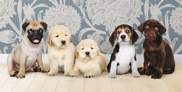 Grupo, retrato, de, cinco, adorável, filhotes cachorro