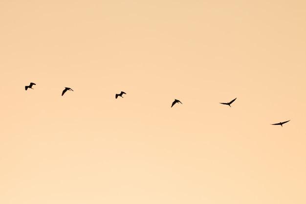 Grupo silhueta de pássaros voando.