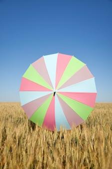 Guarda-chuva colorido no campo de trigo no tempo de colheita. temporada de verão