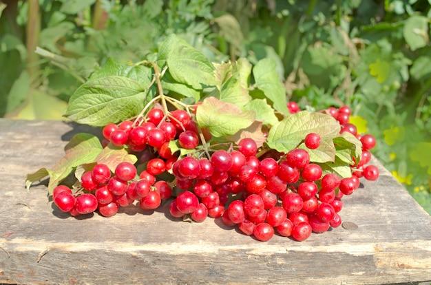 Guelder rose berries ou madeira de flecha