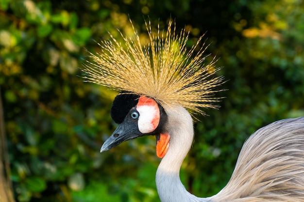 Guindaste coroado caminha em um parque verde
