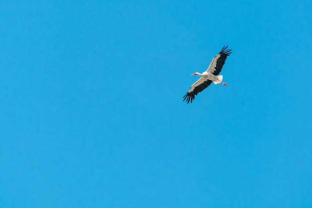 Guindaste voando no céu azul