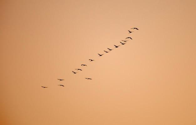 Guindastes ordenados voando em formação