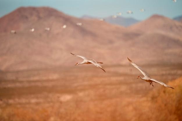 Guindastes voadores