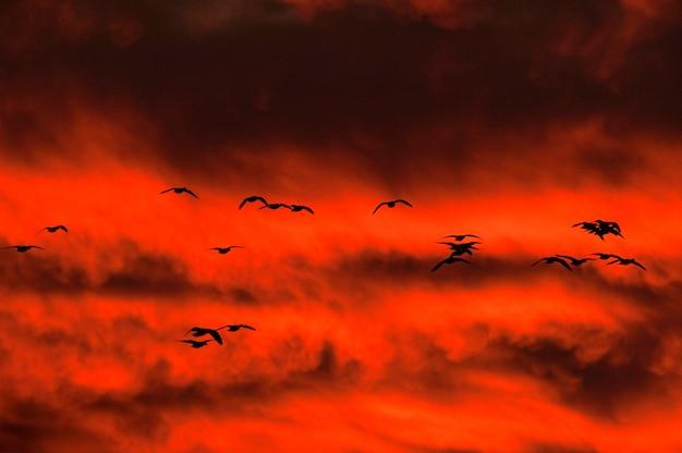 Guindastes voando através de um céu vermelho