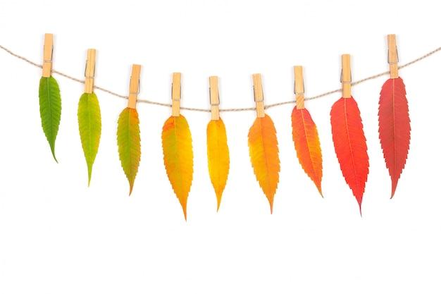 Guirlanda de outono colorido deixa em uma corda com prendedores de roupa de madeira isolado no branco