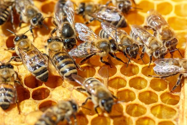 Há muitas abelhas listradas que se sentam em favos de mel