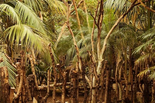 Habitat animal