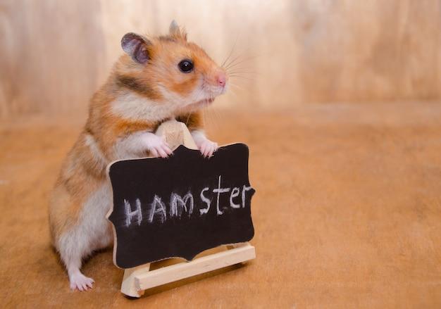 Hamster bonito em pé atrás de um quadro-negro com uma palavra hamster escrito nele