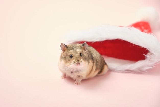 Hamster djungarian fofo com chapéu de natal vermelho em fundo rosa