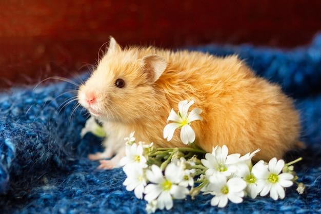 Hamster fofo com flores em azul