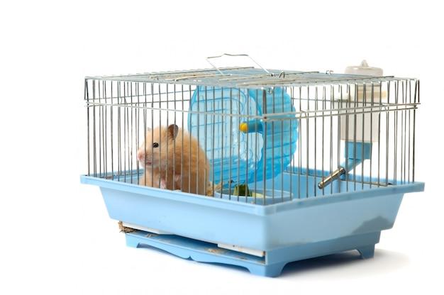 Hamster fofo sentado em uma gaiola olhando através das células da treliça