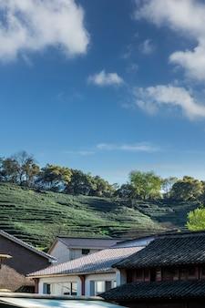 Hangzhou west lake longjing tea mountain