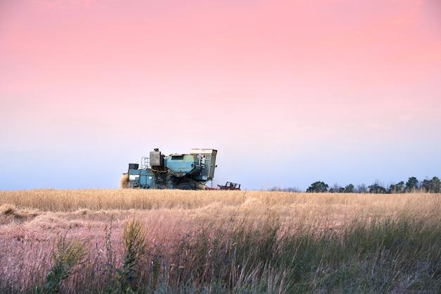 Harvester retro trabalhando no campo contra