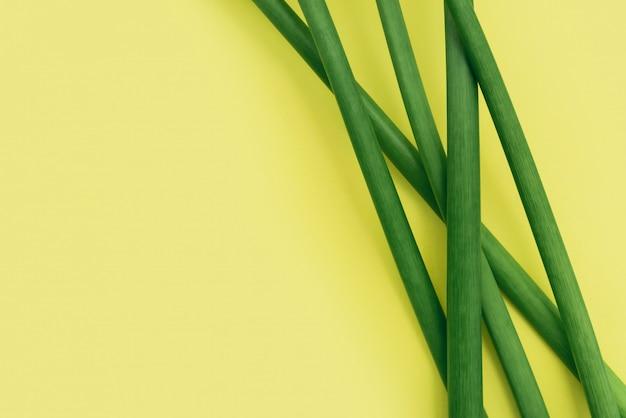 Hastes de flor verde no amarelo com espaço da cópia. moldura natural.