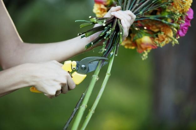 Hastes de flores de corte de florista, closeup de mão feminina com tesouras
