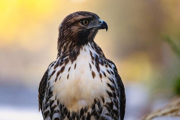 Hawk descansando na natureza