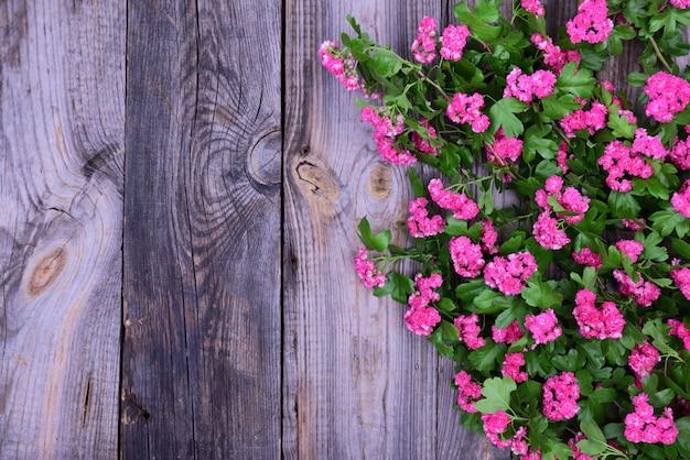 Hawthorn com inflorescências rosa e folhas verdes