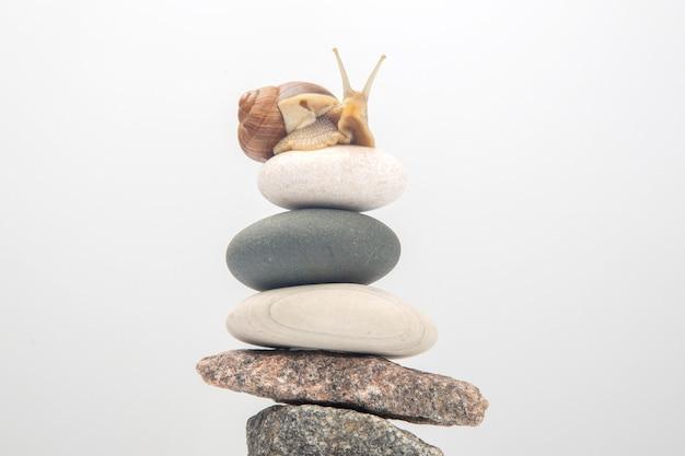 Helix pomatia. caracol no topo de uma pirâmide de pedra. molusco e invertebrado. delicadeza de carnes e comida gourmet