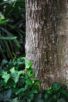 Hera, crescendo, perto, tronco árvore