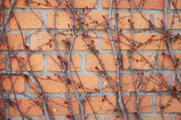 Hera decorativa de videira em uma parede de tijolo