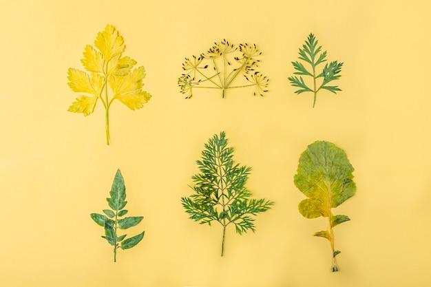 Herbário de diversas folhas secas prensadas de vegetais em fundo amarelo. conjunto botânico de ervas e plantas. composição plana de outono, copie o espaço para o texto