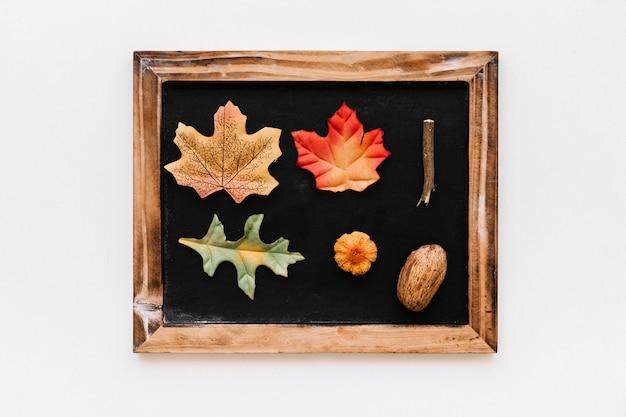 Herbário dentro do quadro vintage