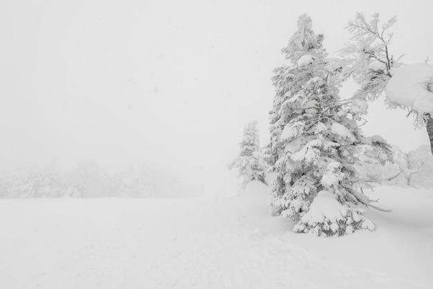 Hoarfrost coberto gelo frio viagem