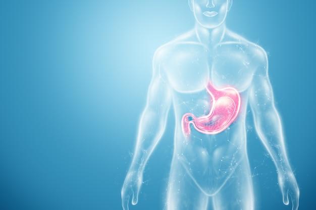 Holograma do estômago no corpo humano Foto Premium