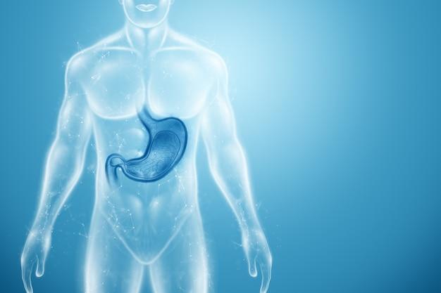 Holograma do estômago no corpo humano