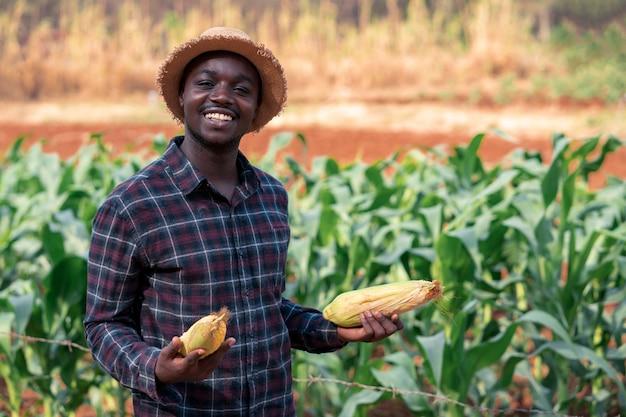 Homem africano fazendeiro segurando um milho fresco na fazenda orgânica com sorriso e feliz. conceito de agricultura ou cultivo
