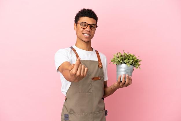 Homem africano jardineiro segurando uma planta isolada em um fundo rosa fazendo gesto de vinda