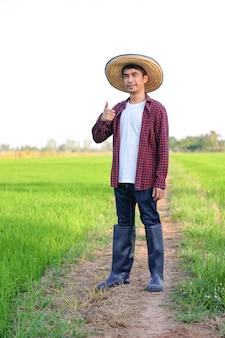 Homem agricultor asiático sorri e polegares para cima na fazenda de arroz verde.