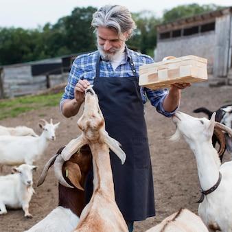 Homem alimentando cabras de frente