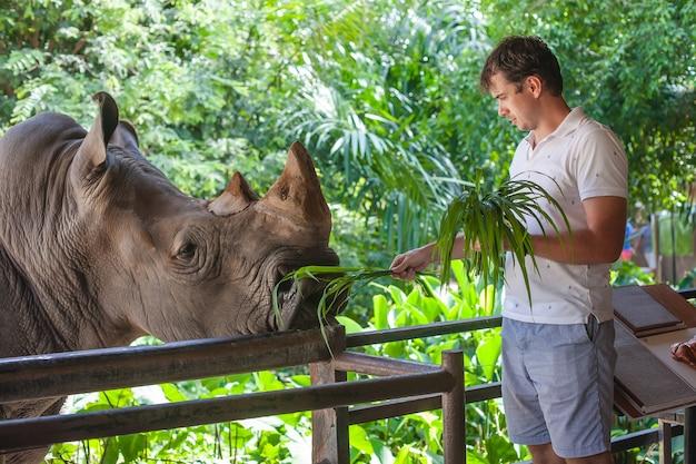 Homem alimentando o grande rinoceronte no zoológico